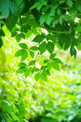 Fototapeta zielone liście w jasnym świetle słonecznym