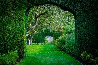 Fototapeta Zielone łuki roślin w ogrodzie angielskiej wsi