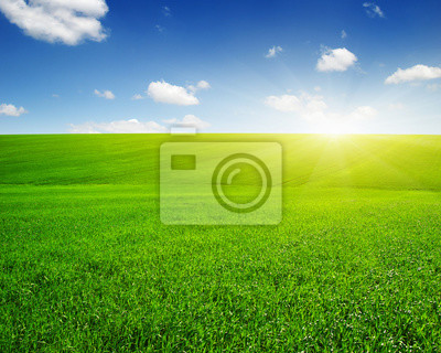Zielone pole i słońce.