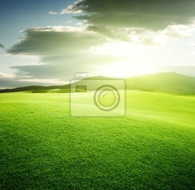 zielone pole i zachód słońca