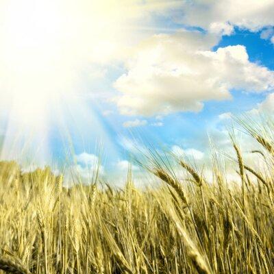 Fototapeta zielone pole z nieba