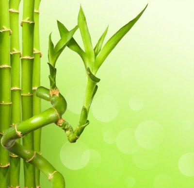 Fototapeta Zielony bambus w tle