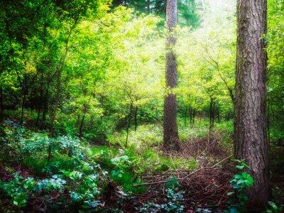 Fototapeta Zielony las