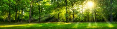 Fototapeta Zielony las panorama latem