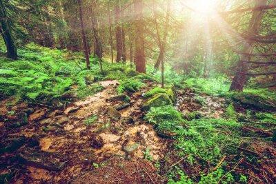 Fototapeta Zielony las wczesnym rankiem.