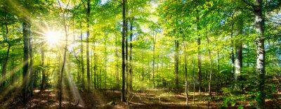 Fototapeta Zielony las wiosną i latem