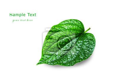 Zielony liść z kropelek wody, zbliżenie.