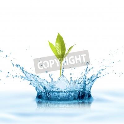 Fototapeta Zielony Liść z plusk wody