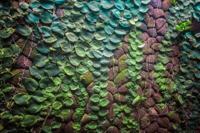 Fototapeta Zielony mur