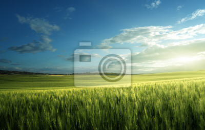 Zielony pole banatka w Tuscany, Włochy