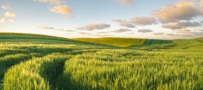 Fototapeta Zielony, pole wiosny, panorama