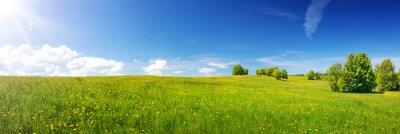 Fototapeta Zielony pole z żółtymi dandelions i niebieskim niebem. Panoramiczny widok na trawę i kwiaty na wzgórzu w słoneczny wiosenny dzień
