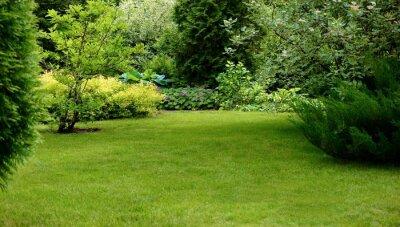 Fototapeta Zielony trawnik otoczony pięknymi roślinami w zadbanym ogrodzie.