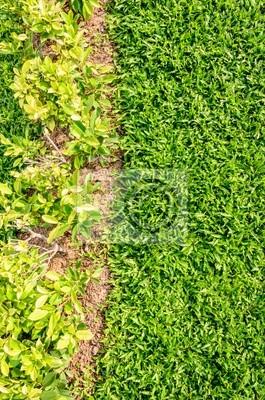 zielonym tle roślin, młoda trawa
