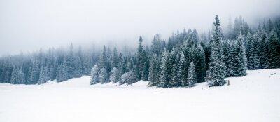 Fototapeta Zima, biały, las i śnieg, Boże Narodzenie