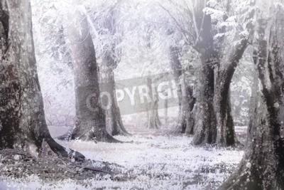 Fototapeta zima mgliste i burzy śnieżnej w lesie