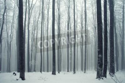 Fototapeta Zima mglisty las bukowy sceny.