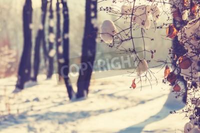 Fototapeta Zima sceny