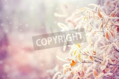 Fototapeta Zima w tle z liści gałęzie drzew śnieg i płatki śniegu na tle Świąt Bożego Narodzenia kartkę z życzeniami