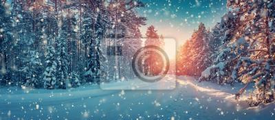 Fototapeta Zimowa panorama na drodze przez las iglasty