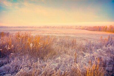Fototapeta zimowy krajobraz o zachodzie słońca. Pole z suchej trawy