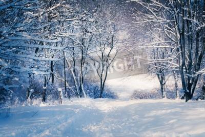 Fototapeta Zimowy krajobraz w lesie śniegu. Aleja w lesie snowy