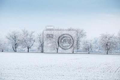 Zimowy Krajobraz Wiersz Drzew W Mróz Na Polu Zimą Fototapety Redro