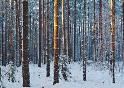 Fototapeta zimowy krajobraz .Winter sceny