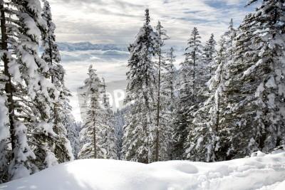 Fototapeta Zimowy las w Alpach w pobliżu Kufstein w Austrii, Europy.