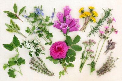 Fototapeta Zioła i kwiaty naturopatyczne