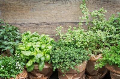 Fototapeta Zioła w doniczkach roślin z miejsca kopiowania