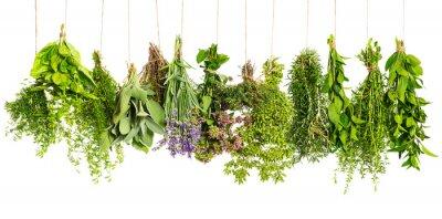 Fototapeta zioła wiszące na białym. składniki żywności
