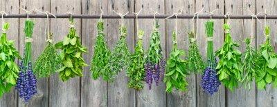 Fototapeta zioła, ziołowe