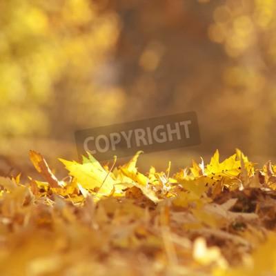 Fototapeta Złota Jesień pozostawia na ziemi.