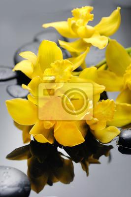 Żółta gałęziasta orchidea na czerni dryluje odbicie