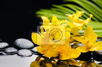 Żółta orchidea z palmą i kamieniami na mokrym tle