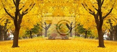 Fototapeta żółte liście klonu krajobrazy
