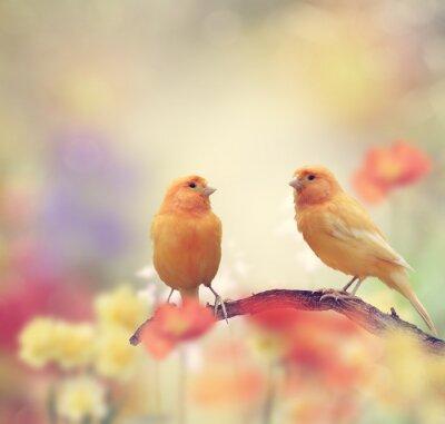 Fototapeta Żółte Ptaki w ogrodzie