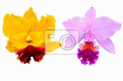 żółty i różowy orchidea na białym tle