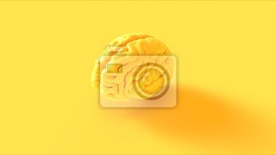 Fototapeta Żółty mózg ludzki Anatomiczny model 3d ilustracja renderowania 3d