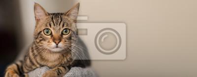 Fototapeta Zrelaksowany kot domowy w domu, wewnątrz
