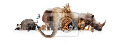 Fototapeta Zwierzęta Safari wisi nad białym banerem