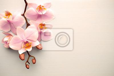 Żywa orchidea koloru koralowego na pastelowym tle.