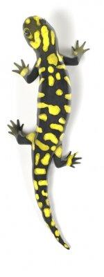 Naklejka 3d render salamandry tygrysa