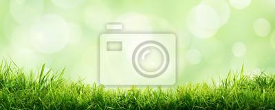 Naklejka A fresh spring sunny garden background of green grass and blurred foliage bokeh.