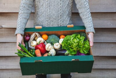 Naklejka A person delivering a fresh box of vegetables. Online organic food shopping