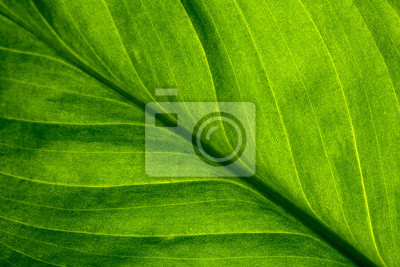 Naklejka Abstract green striped nature background, vintage tone. green textured leaf of the plant. natural eco background.