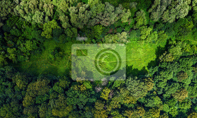 Naklejka aerial forest view with meadow