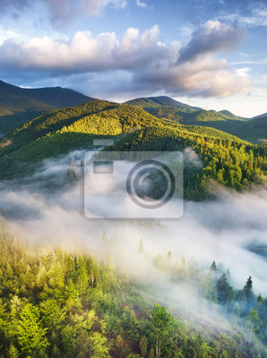 Naklejka Aerial view at the forest in fog. Beautiful natural aerial landcape at the summer time. Forest and mountains.Top view from drone. Mountain-image