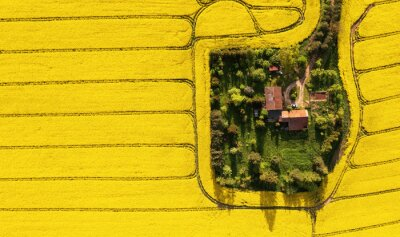 Naklejka Aerial view of a farm in the middle of the rapeseed field with copy space